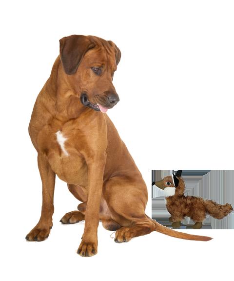 hondenknuffels banner foto