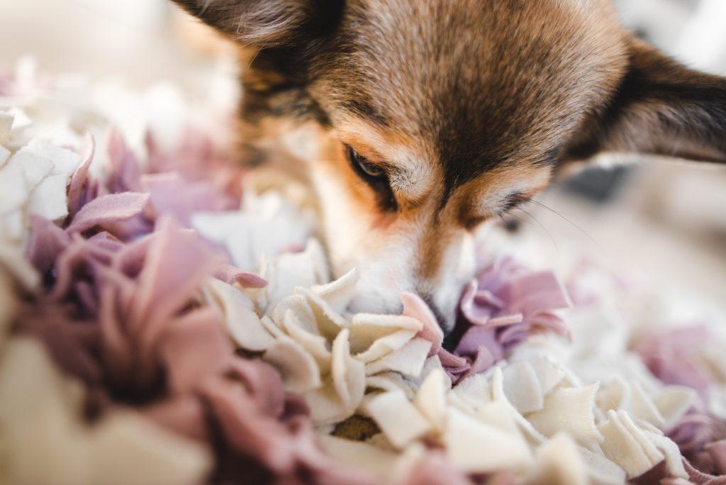 snuffelende hond snuffelt voer in snuffelmat